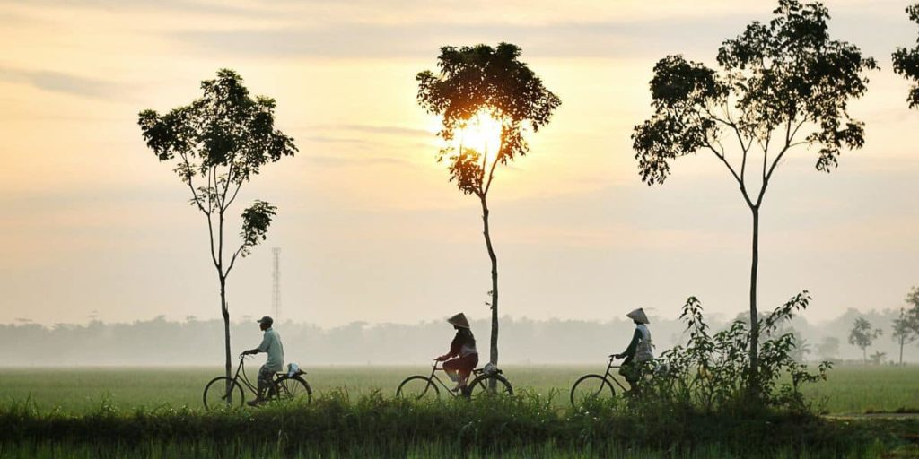 Film-Fixer-Indonesia-Wind-Up-Title-Image-Bicycles-Trees